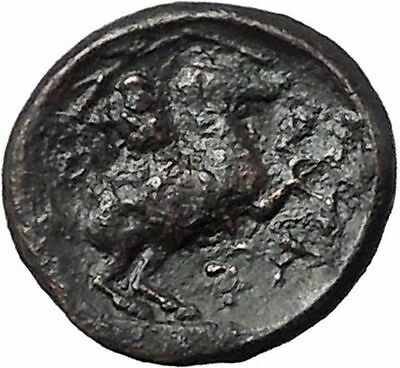 PHARSALOS in THESSALY 400BC Athena Horse Authentic Ancient Greek Coin i49251