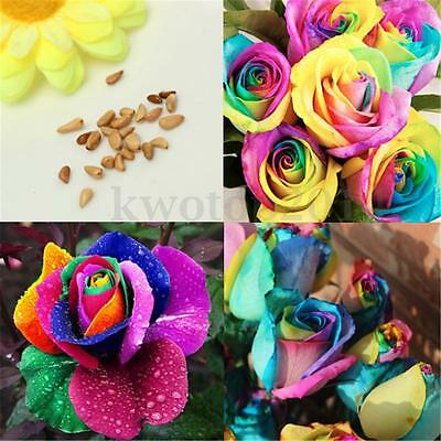 20Pcs Colorful Rainbow Rose Valentine Lover Flower Seeds Garden Home Plant Decor