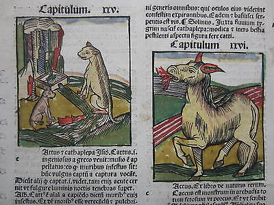 Incunable Leaf Hortus Sanitatis Zoology Bull Colored Woodcut Venice - 1500