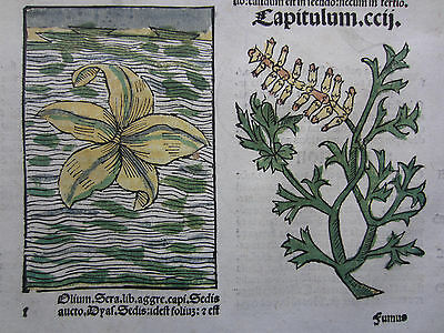 Incunable Leaf Hortus Sanitatis Water Lily Fern Colored Woodcut Venice - 1500