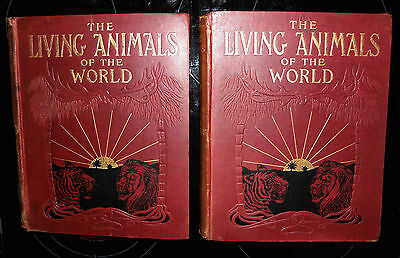 Living Animals of the World: A Popular Natural History c1910 2 vol set