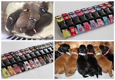 Sets of Puppy ID Whelping Collars Choose Your Own Colour for your Kit Box