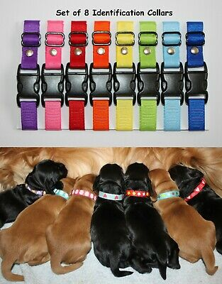 Sets of Puppy ID Whelping Collars Hearts & Dots Choose Your Own Colours, Kit Box