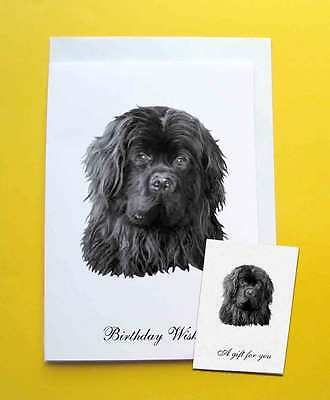 Newfoundland Dog Large A5 Birthday Card & Gift Tag with a choice of 5 verses