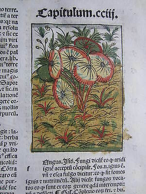 Incunable Leaf Hortus Sanitatis Funghi Mushroom Colored Woodcut Venice - 1500