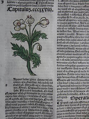 Incunable Leaf Hortus Sanitatis Poppy Colored Woodcut Venice - 1500