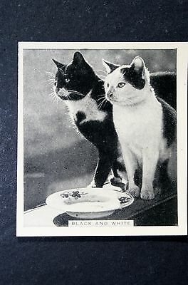 Black and White Cats        Original  1930's Vintage Photo Card  VGC