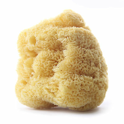 Natural Sea Sponge - Yellow - 5 Inches (SS-YELLOW)