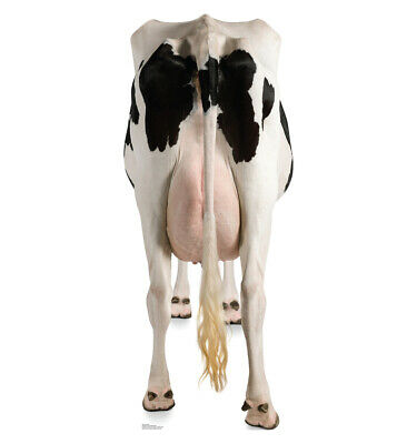 Cow's Rear Life Size Cardboard Cutout Standup