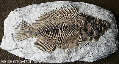 Fossil of a Fish - Fish - A RESIN IMITATION FOSSIL OF A FISH