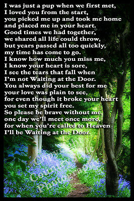 Pet Dog Memorial Fridge Magnet Gift Rainbow Bridge Bluebells Verse Poem