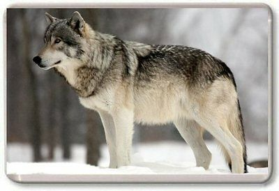 Gray Wolf Fridge Magnet 01