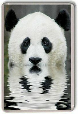 Giant Panda Fridge Magnet 02 Cute