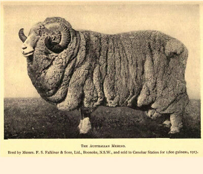 The Care and Management of Sheep - Raise, Breed, Feed, House