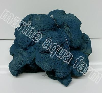 Aquarium Large Blue Sponge Coral Ornament, Marine Reef Fish Tank Decor