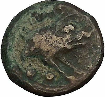 PAESTUM in LUCANIA 1stCenBC Demeter Boar Authentic Ancient Greek Coin i52378