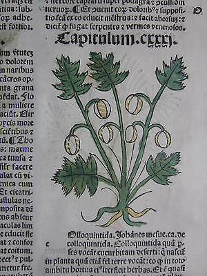 Incunable Leaf Hortus Sanitatis Colocynth Colored Woodcut Venice - 1500