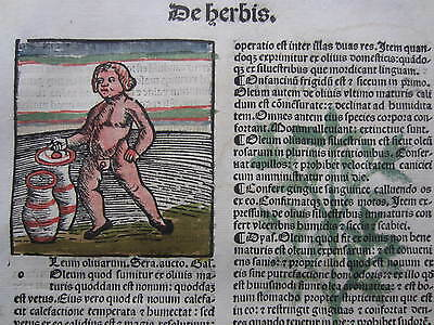 Incunable Leaf Hortus Sanitatis Olive Oil Incense Colored Woodcut - 1500