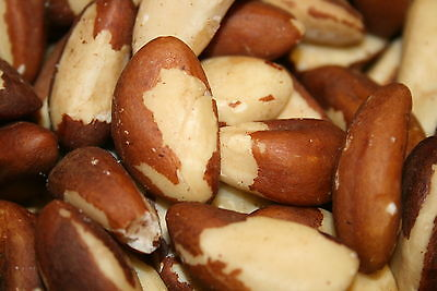 Brazil Nuts Raw Unsalted, 2Lbs