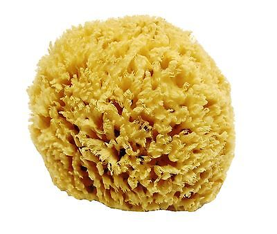 Unbleached Honeycomb Natural Sea Sponge - Strong type