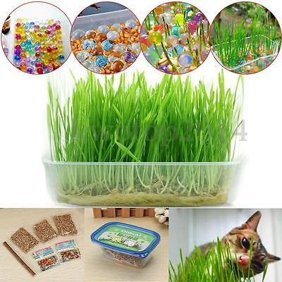 Green Safety Catnip Grass Healthy Cat Heathy Treat Crystal Balls Seeds Grow Kit