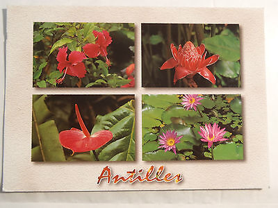 Cpm Guadeloupe Fleurs Tropicales