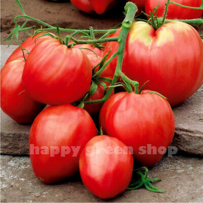 VEGETABLE PINK TOMATO OXHEART - 350 SEEDS - Bison Heart - Up to 500g fruit