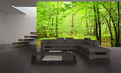 Autumnal Forest  Wall Mural Photo Wallpaper GIANT DECOR Paper Poster Free Paste