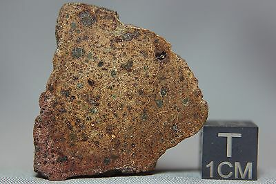NWA 7648 LL4 Chondrite Meteorite 26.9 gram main mass beautiful end cut
