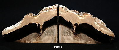 "Exquisite Petrfied Wood Bookends 11"" wide, 8 1/2"" tall, 1 5/8"" thick, 8.4 pounds"
