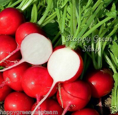 VEGETABLE - SEED TAPE 5 METERS - RADISH CHERRY - 250 seeds - Raphanus sativus