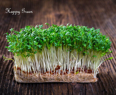 Sprouting seeds - CRESS seeds Sprouts - 11 000 SEEDS - 30 GRAMS - Vegetables