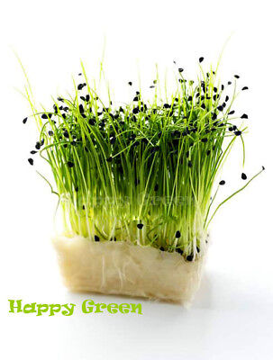 Sprouting seeds - CHIVE - Sprouts 10 GRAMS / 0.3 oz
