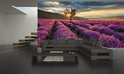 Lavender Field at Sunrise Wall Mural Photo Wallpaper GIANT DECOR Paper Poster