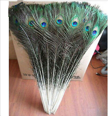 "Wholesale 10-1000pcs 10-40""/25-100cm Beautiful Natural Color Peacock Feathers"