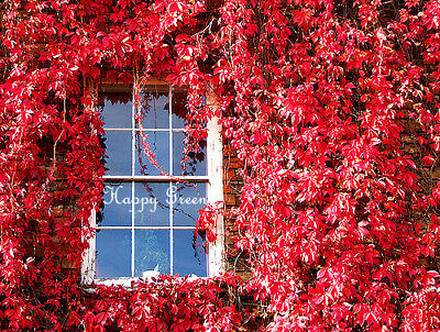VIRGINIA CREEPER - 25  seeds - Parthenocissus quinquefolia - Vines