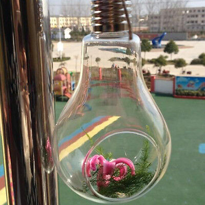 Light Bulb Shape Glass Hanging Hydroponic Flower Plant Container Decoration
