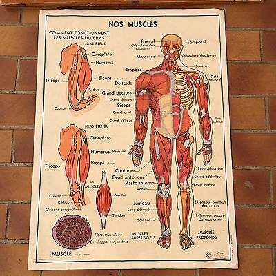 ROSSIGNOL VINTAGE FRENCH School Poster anatomy Two Sides 1950\'s ...
