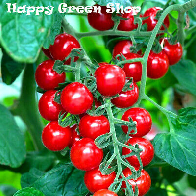 Vegetable Cherry Tomato - Red Coral - 130 Seeds
