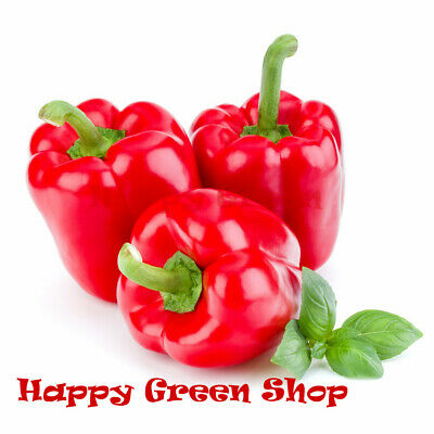 VEGETABLE - SWEET PEPPER - RED BELL - 100 Seeds