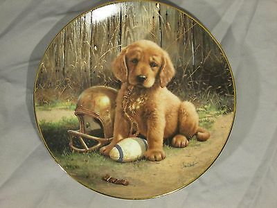 Wide Retriever Puppy Collector Plate River Shore 1989 Football Limited Edition