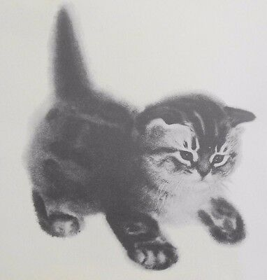 1956 Newberry TABBY KITTEN Cat Drawing Clare Turlay Frame Ready Limited Print
