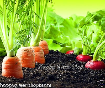 VEGETABLE - SEED TAPE MIX - 430 SEEDS - 5.7m / 8ft  Carrot - Radish - Lettuce