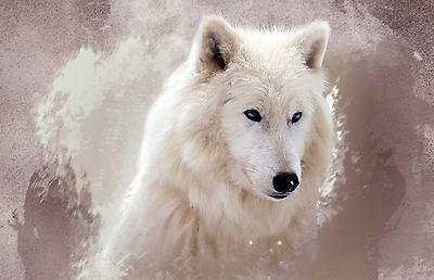 Framed Print - Beautiful White Haired Blue Eyed Wolf (Picture Poster Animal Art)