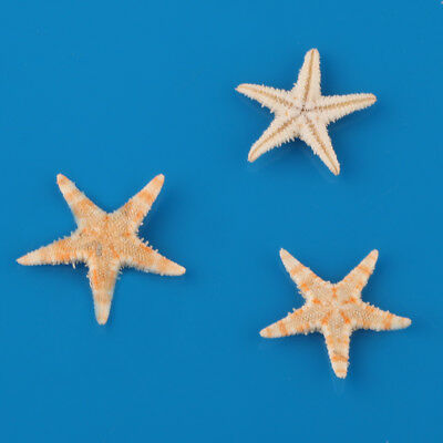 100 Pcs New Cute Small Mini Starfish Sea Star Shell Beach Deco Craft DIY Making