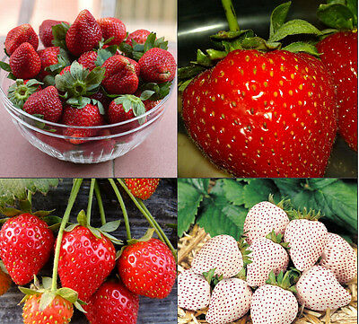 Red 100pcs Strawberry Climbing Strawberry Fruit Plant Seeds Rare And Delicious