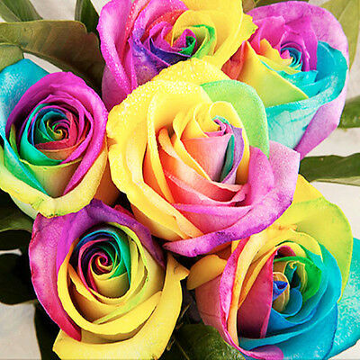 Mystic Rainbow Rose Bush Flower Seeds 100pcs Stratisfied Seeds Home Plant Decor