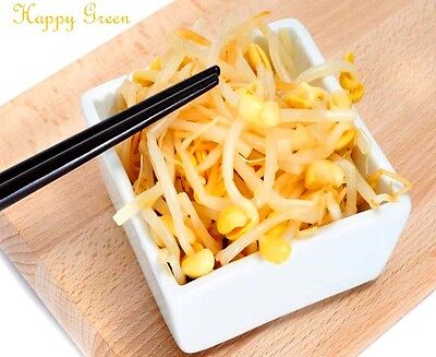 Sprouting seeds - SOYBEAN  Sprouts seeds 20 GRAMS