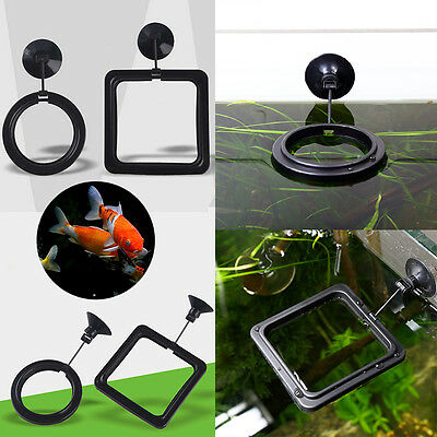 Fish Tank Aquarium Floating Feeding Ring Food Tray Feeder with Suction Cup Hot