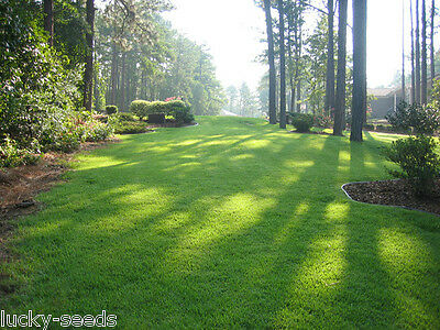 [On Back-Order] Zenith Zoysia Grass Seed 100% Pure 5 Lbs. 5000 Sq.ft Coverage
